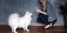 Wearables und Smartphone-Apps erobern das Tierreich