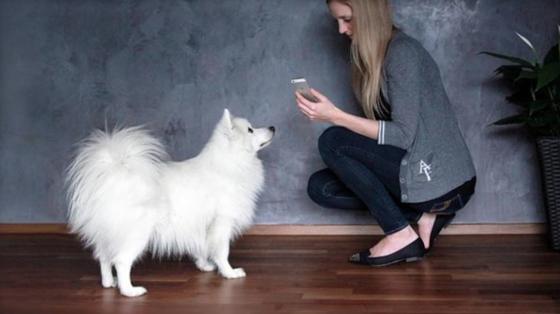 Pet Remote hilft beim Hundetraining: Mit dem Smartphone kann der Besitzer das Halsband des Hundes zum vibrieren bringen. Angeblich wendet der Hund seine Aufmerksamkeit augenblicklich zum Besitzer.