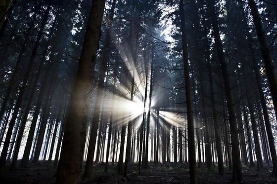 Lichtstrahlen brechen in einem Wald bei Weilburg in Hessen durch die Baumkronen. Forscher wollen wissen, wie es um bedrohte Tierarten bestellt ist und setzen dabei auf modernste Technik. Zum Einsatz kommen unter anderem Lauschstationen, Drohnen und Satelliten.
