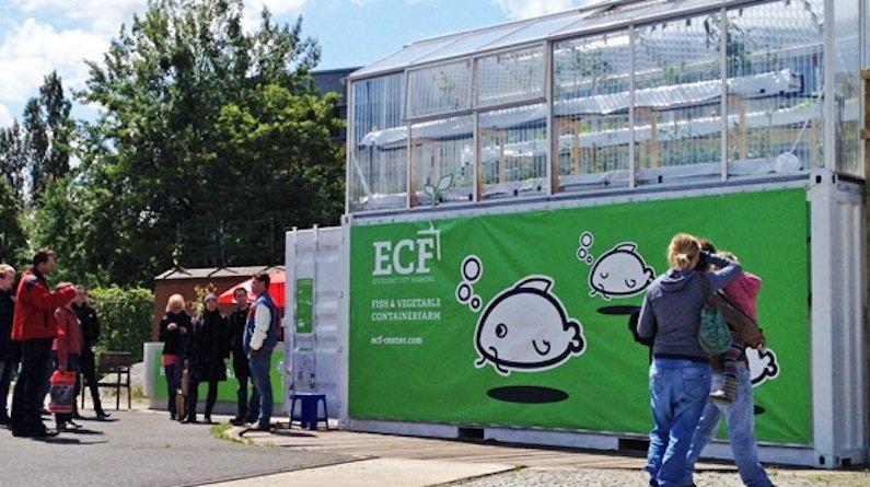 Die ECF-Stadtfarm besteht aus einem Fischbecken (unten im Container), das den Dünger liefert für die Tomatenzucht darüber.