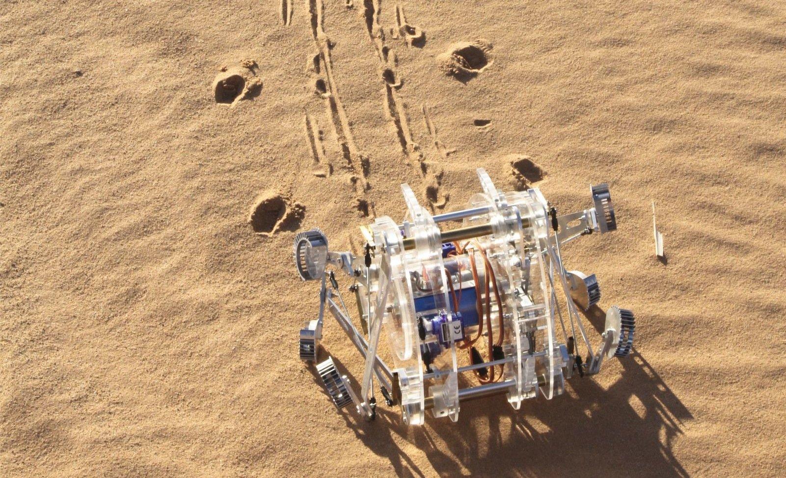 Bionischer Roboter nach dem Vorbild einer in der marokkanischen Wüste lebenden Spinne: Wie die Spinne kann auch der Roboter springen.