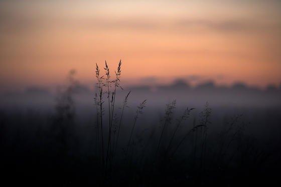 Bodennebel liegt bei Sonnenuntergang über den Elbwiesen in Dresden. Im Nebel reflektieren Partikel Lichtstrahlen nicht geradlinig, sondern diffus. Diese Tatsache machten sich die Forscher des KIT zunutze.