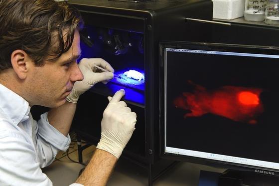 RWTH-Wissenschaftler Twan Lammers entwickelt mit Nanowirkstoffen Methoden zur Darstellung des Tumorwachstums, die körperliche Eingriffe wie Schnitte nicht mehr erforderlich machen.