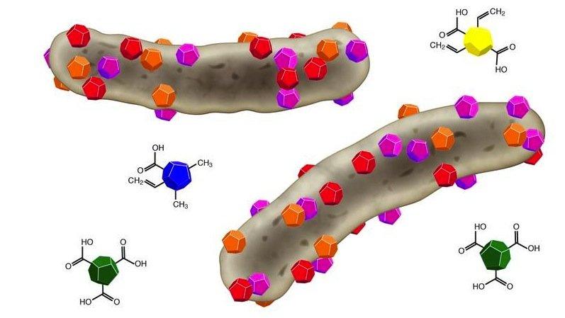 Die farbigen Partikel symbolisieren unterschiedliche Nanodiamanttypen, die sich an Bakterienzellen (grau) binden und diese töten.