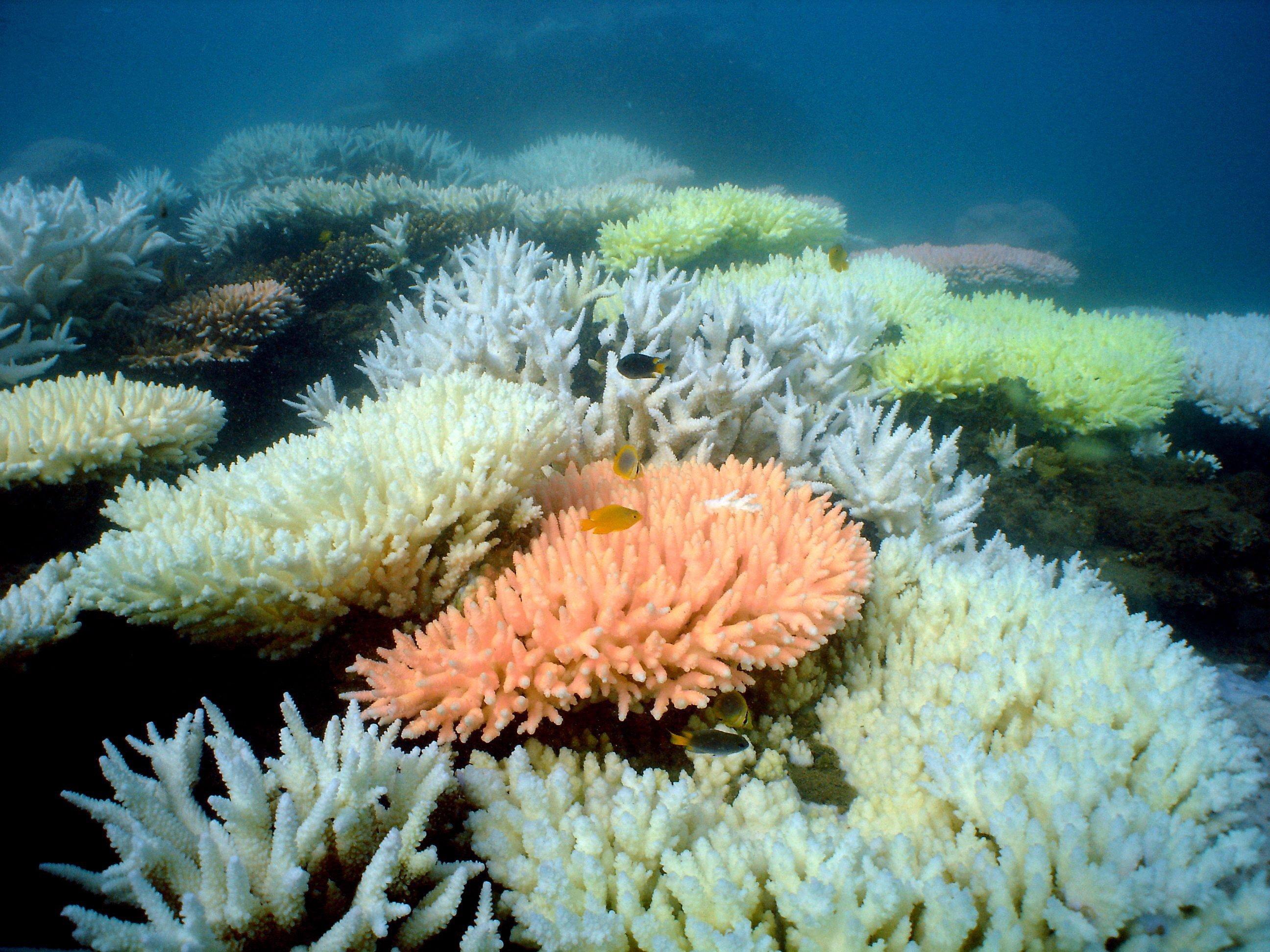 Korallen im Great Barrier Reef vor Australien: Derzeit erholen sich die Bestände wieder.