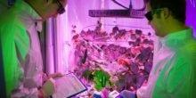 So züchten DLR-Ingenieure Salat und Tomaten im Hochhaus