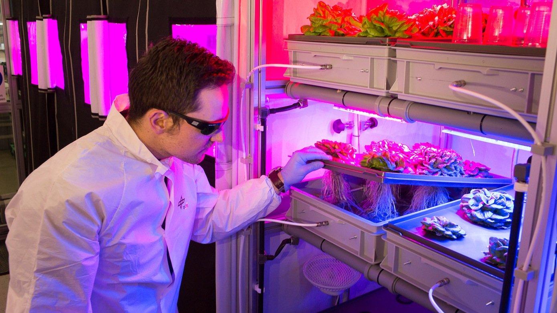 Anbau von Salat in Nährlösung im DLR-Labor in Bremen: Solche Anbaumethoden sollen künftig Astronauten auf Langzeitmissionen mit frischem Gemüse versorgen.