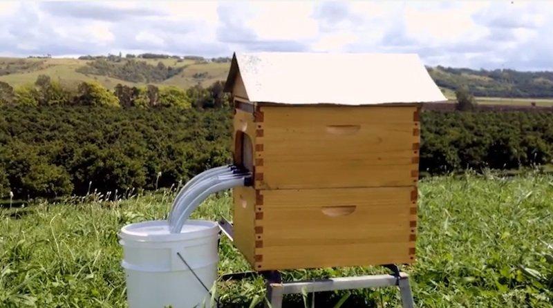 Flow Hive: Das von den AustraliernStuart und Cedar Anderson erfundene System ermöglicht den Honigfluss per Knopfdruck – ohne dass die Bienen gestört werden.