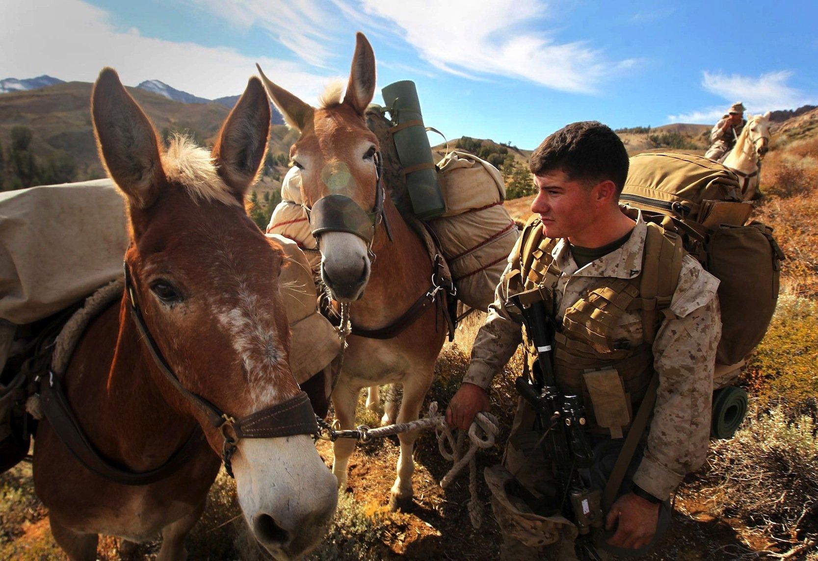 Mulis im Einsatz für die US Marines in Kalifornien: Die Tiere sind als Lastesel den Robotern der Google-Tochter Boston Dynamics haushoch überlegen. Vor allem sind sie viel leiser.