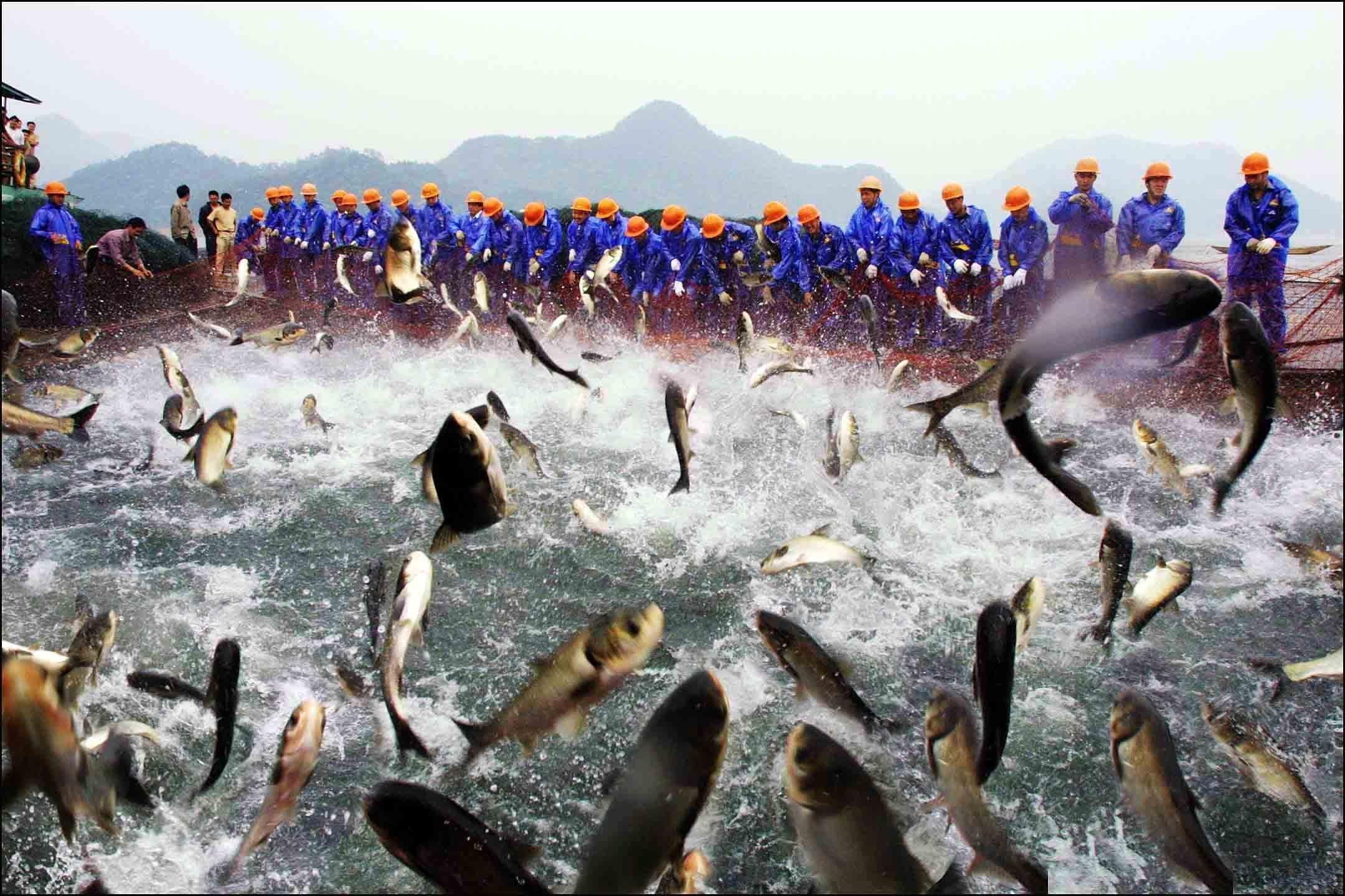 Fischfang im Thousand-island Lake in Chun'an City: nahezu idyllisch mutet das Bild von 2003 an.Entlang der chinesischen Küsten fürchten Fischer inzwischen um ihre Beute. Immer mehr flache Stellen werden zwecks Landgewinnung zubetoniert.