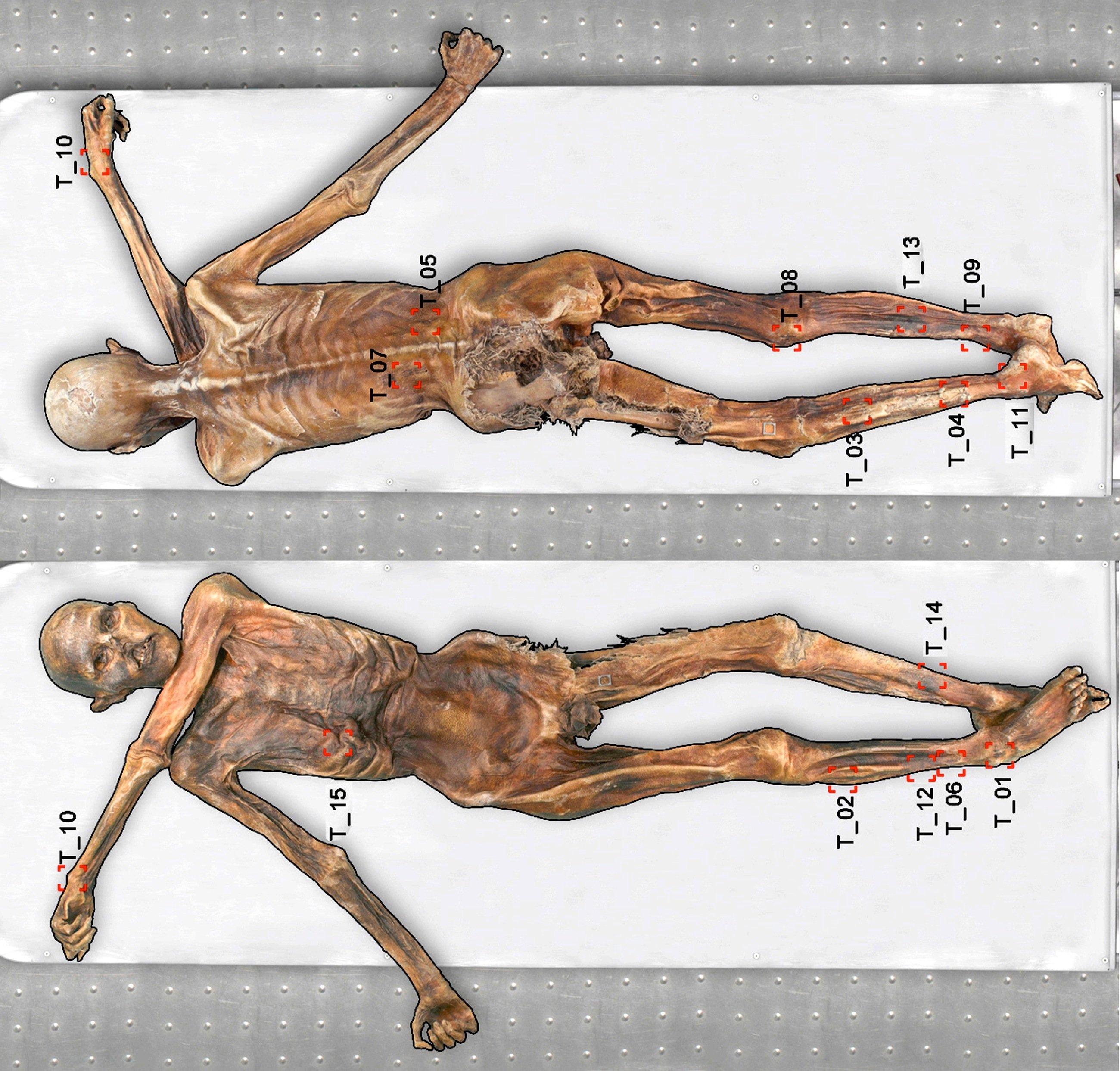 Kartierung aller Tätowierungen auf Ötzis Körper: Die Forscher in Bozen haben inzwischen 61 Tätowierungen auf der Haut entdeckt.