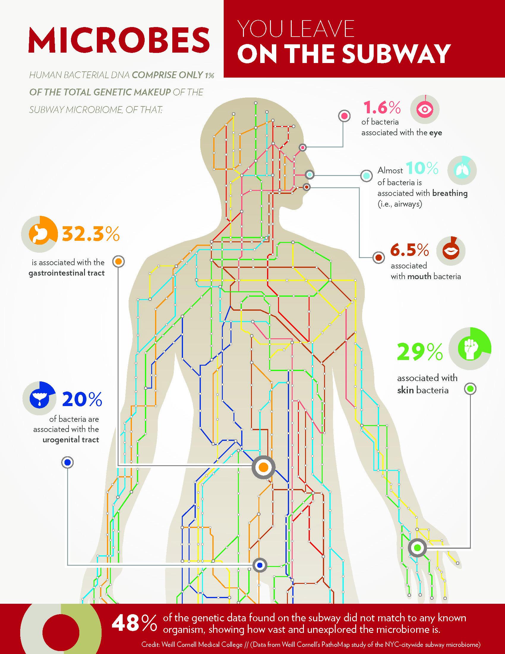Erstaunlich: Fast die Hälfte der in New York gefundenen Mikroben konnten die Wissenschafter keinem bekanntem Lebewesen zuordnen. Im Land der Mikroben gibt es also noch viel zu erforschen.