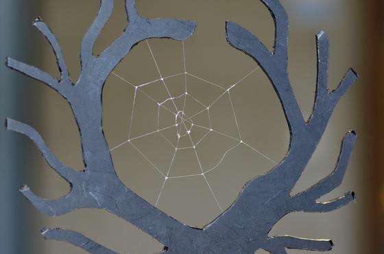 Spinnennetz aus Biotech-Spinnenseide.