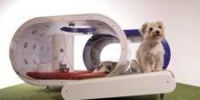 Für 28.000 Euro: Ingenieure entwickeln das Samsung Dream Doghouse