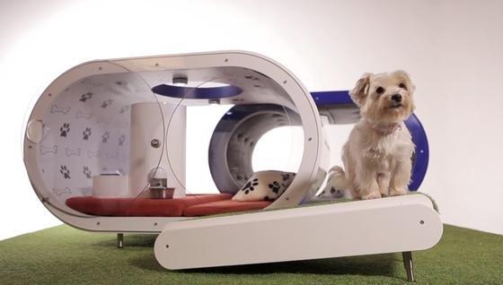 Von wegen Hundeleben: Mit Laufband, automatischem Futterspender, Pool, Fernseher und anderen Annehmlichkeiten kann sich der vierbeinige Bewohner der Samsung-Villa die Zeit vertreiben. Gefällt aber wahrscheinlich nur der Kategorie Schoßhund.