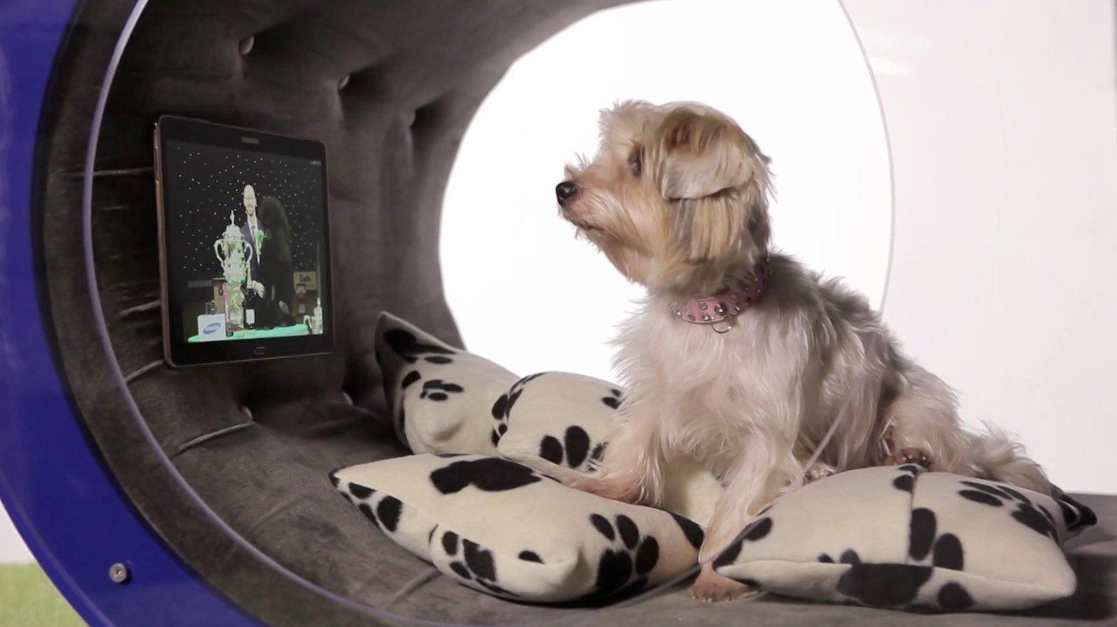 Ein Hund, der etwas auf sich hält, schaut auch Fernsehen.