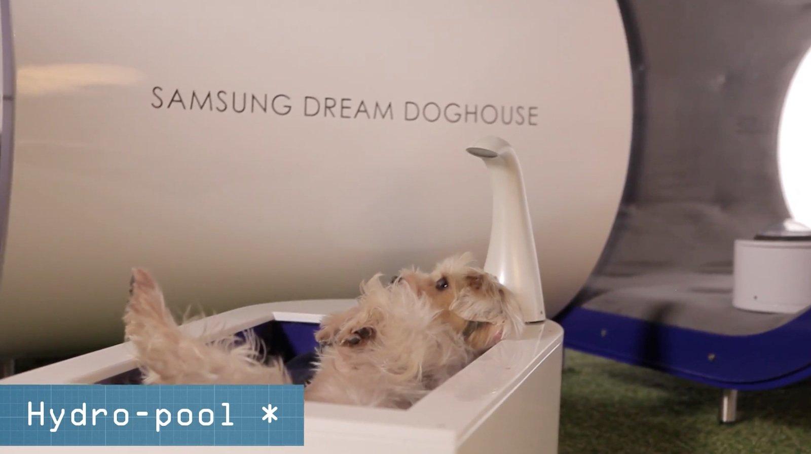 Kleines Bad zwischendurch: In SamsungsDream Doghouse gibt es auch einen Pool.