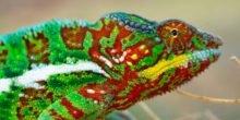 Kristalle aus Guanin: Mit Nanotrick die Farbe wechseln