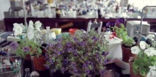 Bier für Blumen: Weiße Petunien werden rot