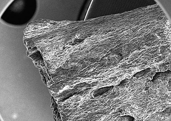 Zwittermaterial Cyberholz: Unter dem Rasterelektronenmikroskop ist die holzähnliche Struktur deutlich sichtbar.