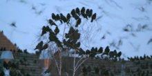 Hören geht immer: Mit Vogelgezwitscher Produktionsanlagen überwachen