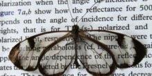 Nanostrukturen machen Glasflügelschmetterling fast unsichtbar