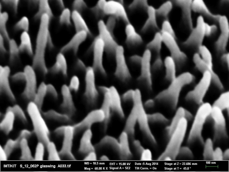 Nanostrukturen auf Schmetterlingflügel: Die Unregelmäßigkeit in Größe und Verteilung bewirkt die geringe Lichtreflexion bei allen Blickwinkeln.