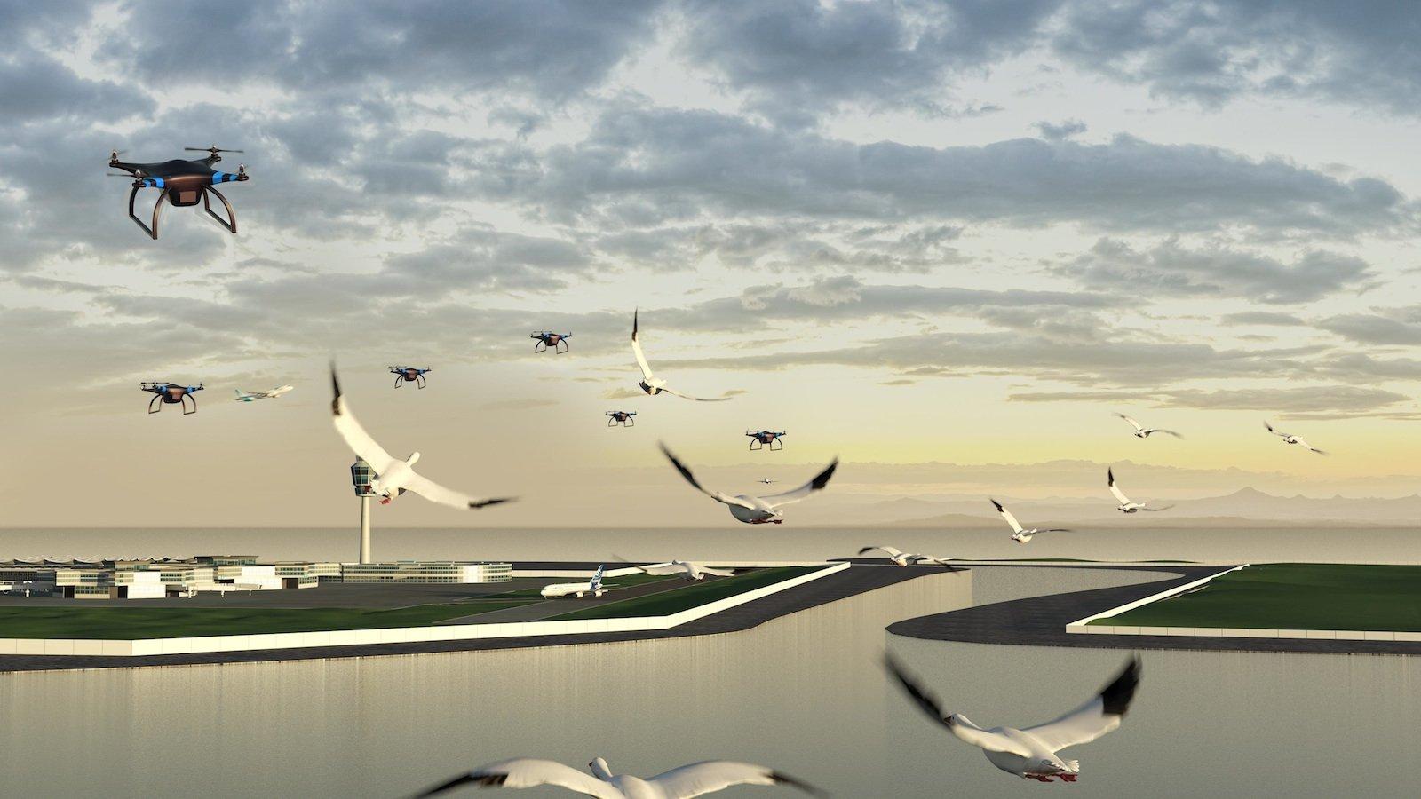 Immerhin bis ins Finale schaffte es auch das Team Birdport. DIe Idee: Drohnen sollen verhindern, dass Vögel in die Flugzeugturbinen geraten.