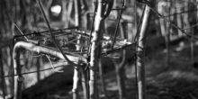 Ausgewachsen – Bäume gedeihen zum Möbelstück