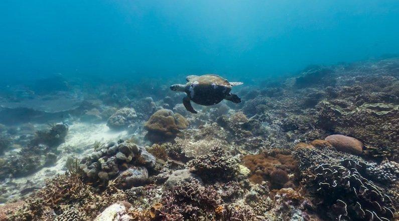 Ocean Maps: Die faszinierende Unterwasserwelt zu dokumentieren ist für Google schon aufwendiger als für Street View mit Autos umherzufahren, die mit Kameras bestückt sind. Hier müssen Taucher an die Arbeit.