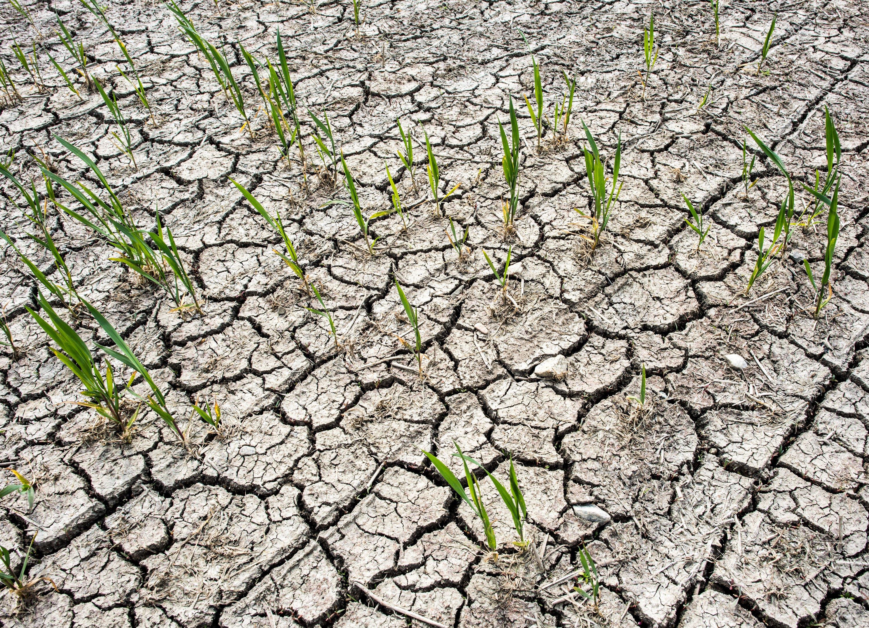Aufgerissener und ausgetrockneter Ackerboden eines Feldes im Oderbruch in Brandenburg. Und das schon im Mai...