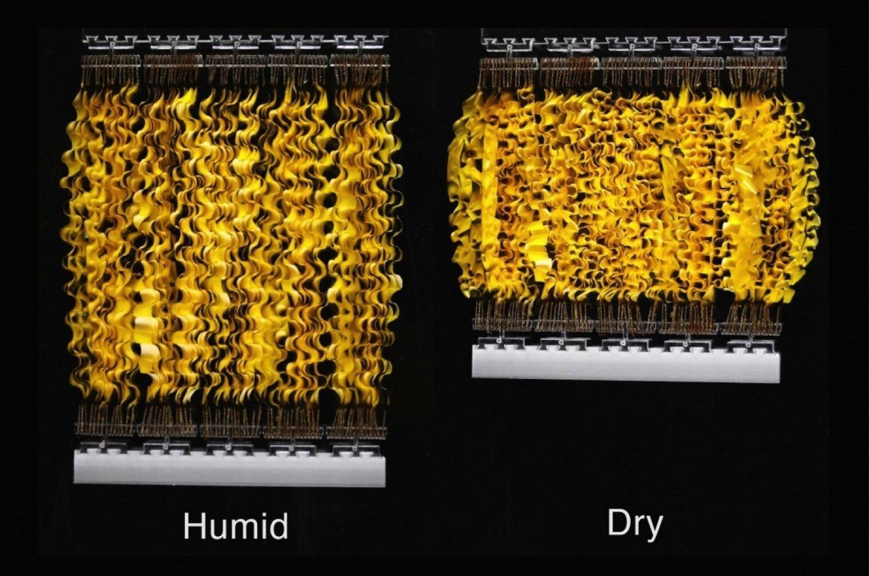 Die Forscher haben Plastikstreifen mit Sporen versehen und damit künstliche Muskeln geschaffen. Die Sporen dehnen sich bei Wasseraufnahme aus und erzeugen dabei erhebliche Kräfte.