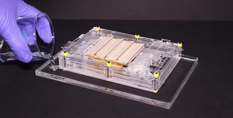 In dieser Apparatur erzeugen die oszillierenden Bewegungen der künstlichen Muskeln genügend Energie, um zwei Leuchtdioden zu betreiben.