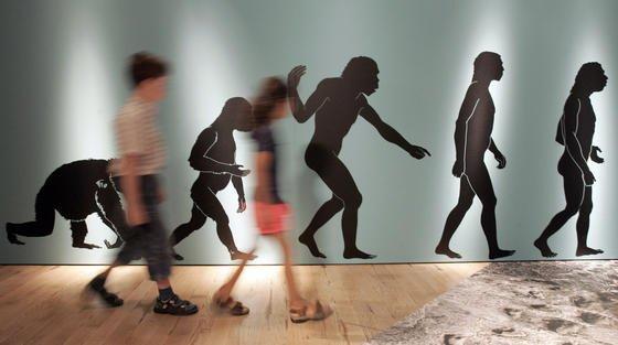 Der Mensch: Noch nicht lange auf der Erde und bald schon wieder weg?Trifft das sechste Massensterben auf dem blauen Planeten auch die Menschheit? Oder bleibt Homo Sapiens verschont? Wissenschaftler fordern zum Handeln auf.
