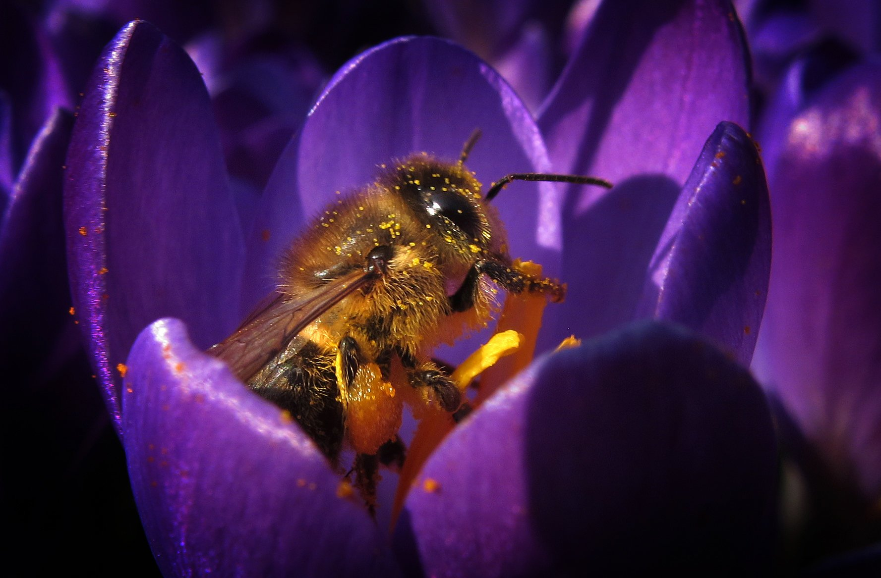 Tiere spielen eine zentrale Rolle in unserem Ökosystem. Und so gilt: OhneHonigbiene gäbe es keine Äpfel, Kirschen etc.