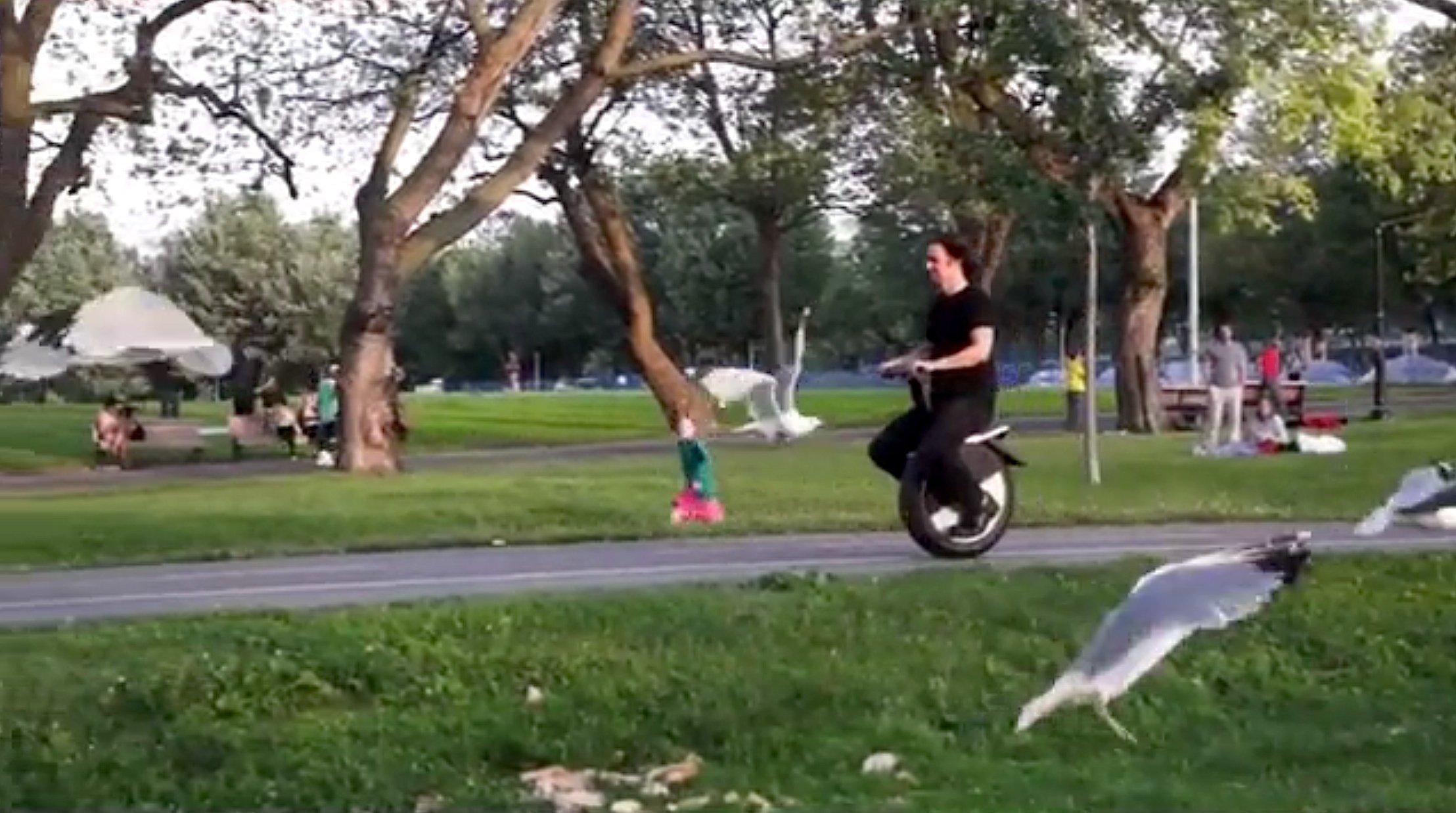 Da geraten auch die Möwen in Bewegung: Ein Moto Pogo auf dem Weg durch einen Park.