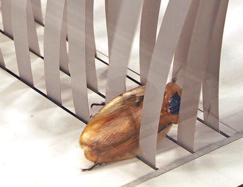 Eine Kakerlake hat es den Forschern vorgemacht: Das Tier kippt auf die Seite und kriecht durch die Lücke.