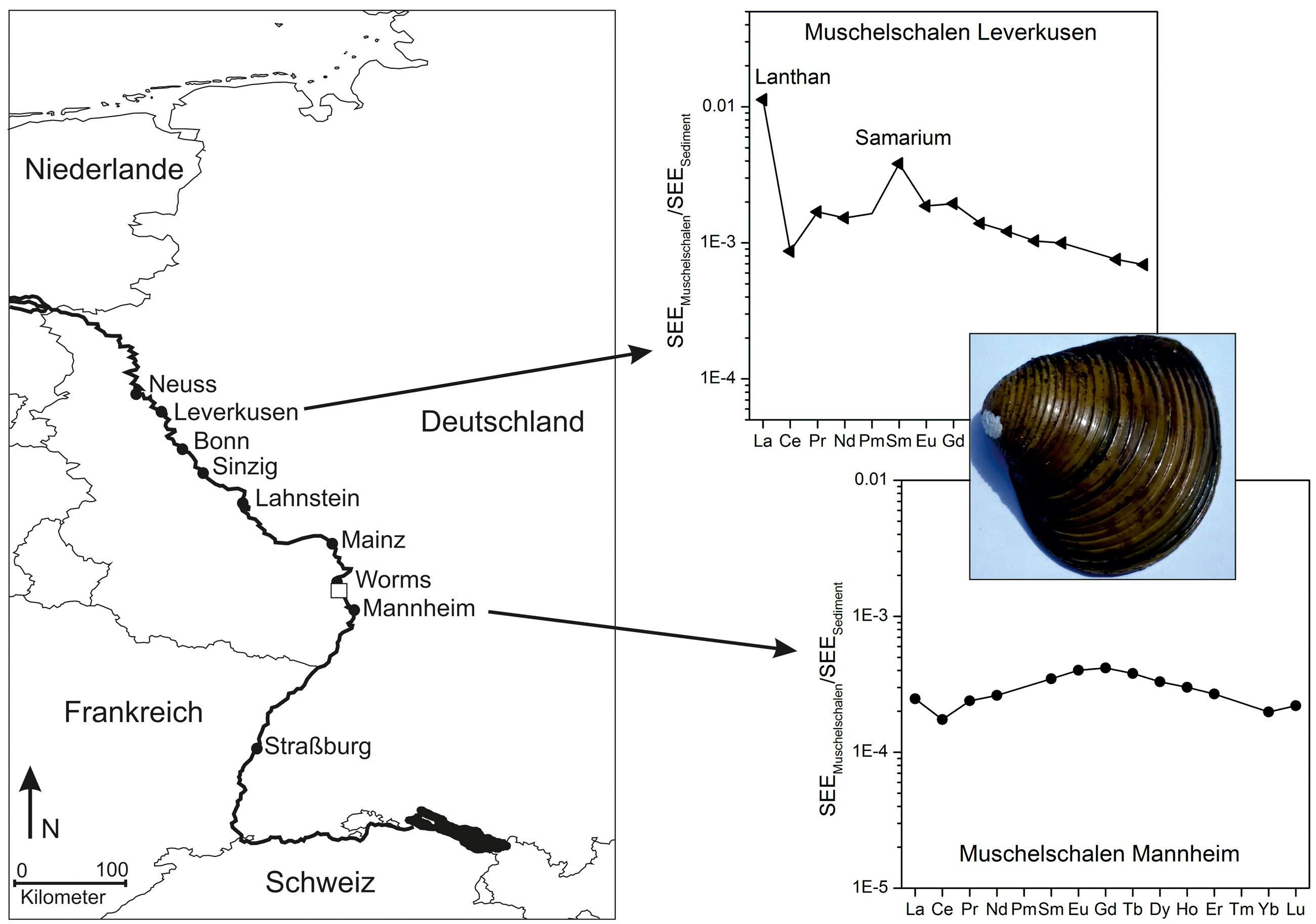 Flussabwärts von Worms haben Michael Bau und Gila Merschel von der Universität Bremen anthropogene Hochtechnologiemetalle in Muscheln gefunden. Sie stammen aus einem Betrieb in Worms.