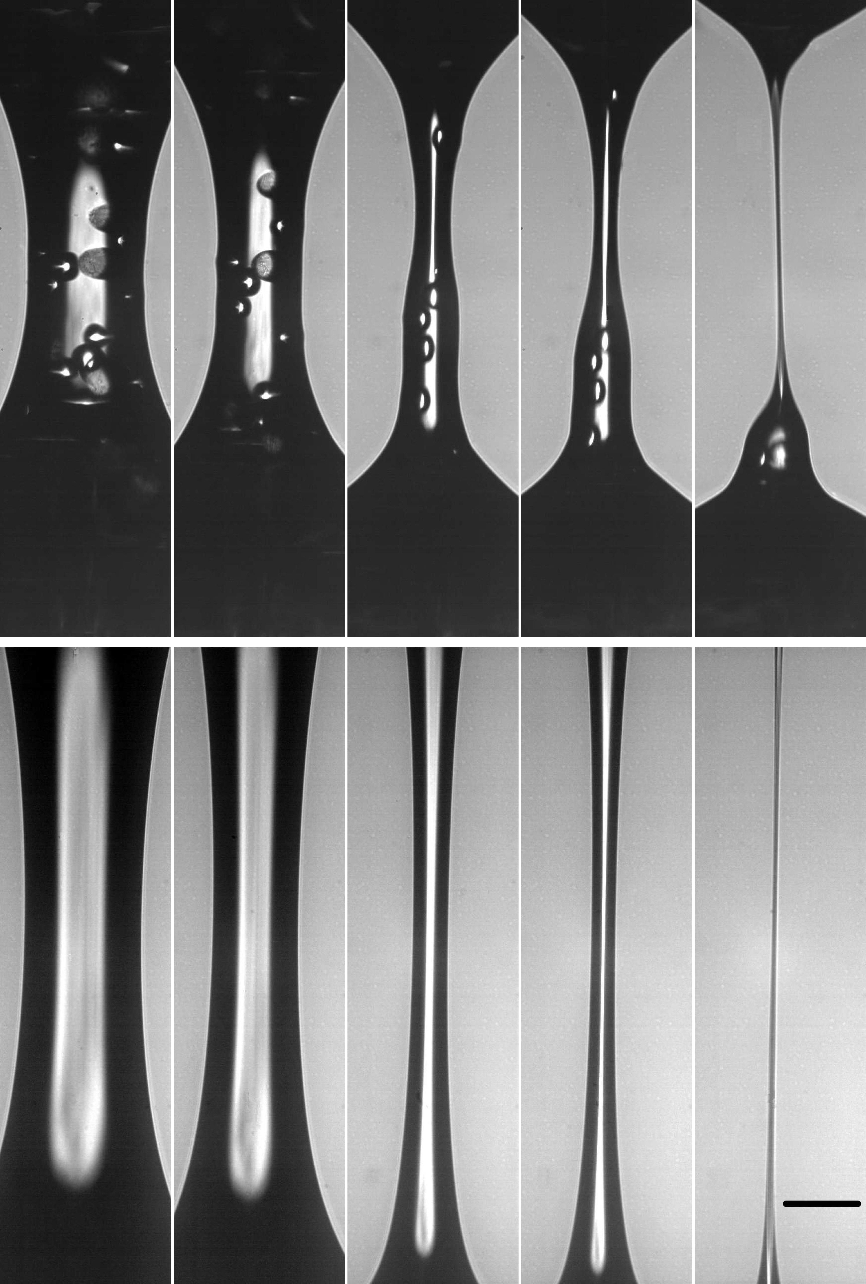 Blick in ein Tropfen-Experiment: Die Forscher konnten erstmals belegen, dass Feststoff-Teilchen in Suspensionen den Tropfvorgang auslösen und beschleunigen.Die fünf Aufnahmen der Hochgeschwindigkeits-Kamera zeigen oben - von links nach rechts - einen Tropfvorgang: Das fadenförmige Gebilde entsteht, wenn die Platten mit der Suspension auseinandergezogen werden. Gut zu erkennen sind die Festkörper-Teilchen, die wie Kügelchen darin schweben. Sie stören die Oberfläche der Flüssigkeit, beulen sie aus und behindern die Strömung der Flüssigkeit innen wie außen. Gleichzeitig beeinflussen sie die Oberflächenkrümmung, der kapillare Druck erhöht sich und der Ablöseprozess wird beschleunigt. Zum Vergleich zeigt das untere Bild das Experiment mit Silikonöl, das keine Festkörper-Teilchen enthält.