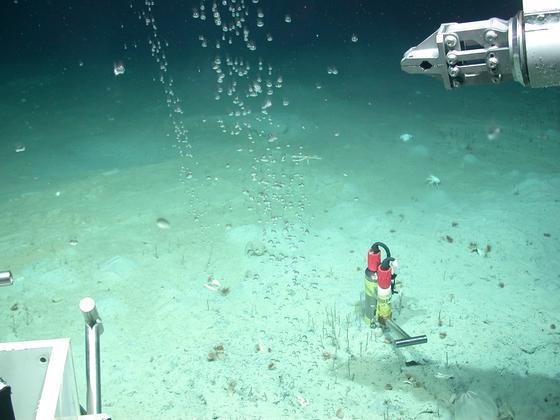 Der Meeresboden in der Tiefsee vor der pakistanischen Küste in 2861 m Tiefe: Jetzt hat das Bremer Zentrum für Maritime Umweltwissenschaften einen neuen Tauchroboter in Betrieb genommen, der noch bessere Aufnahmen vom Meeresgrund liefern kann.