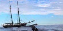 Verstellbare Schiffsschraube: Segelschiff produziert Strom auf See