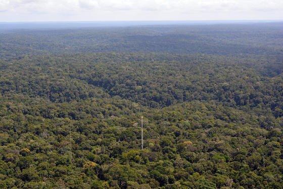 Atto im brasilianischen Regenwald: Der Messbereich des Klima-Turms deckt mehrere tausend Quadratkilometer ab.