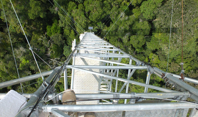 Schwindelerregender Blick nach unten: Mit 325 m Höhe ist der neue Klima-Messturm im brasilianischen Regenwald noch einen Meter höher als der Eiffelturm.