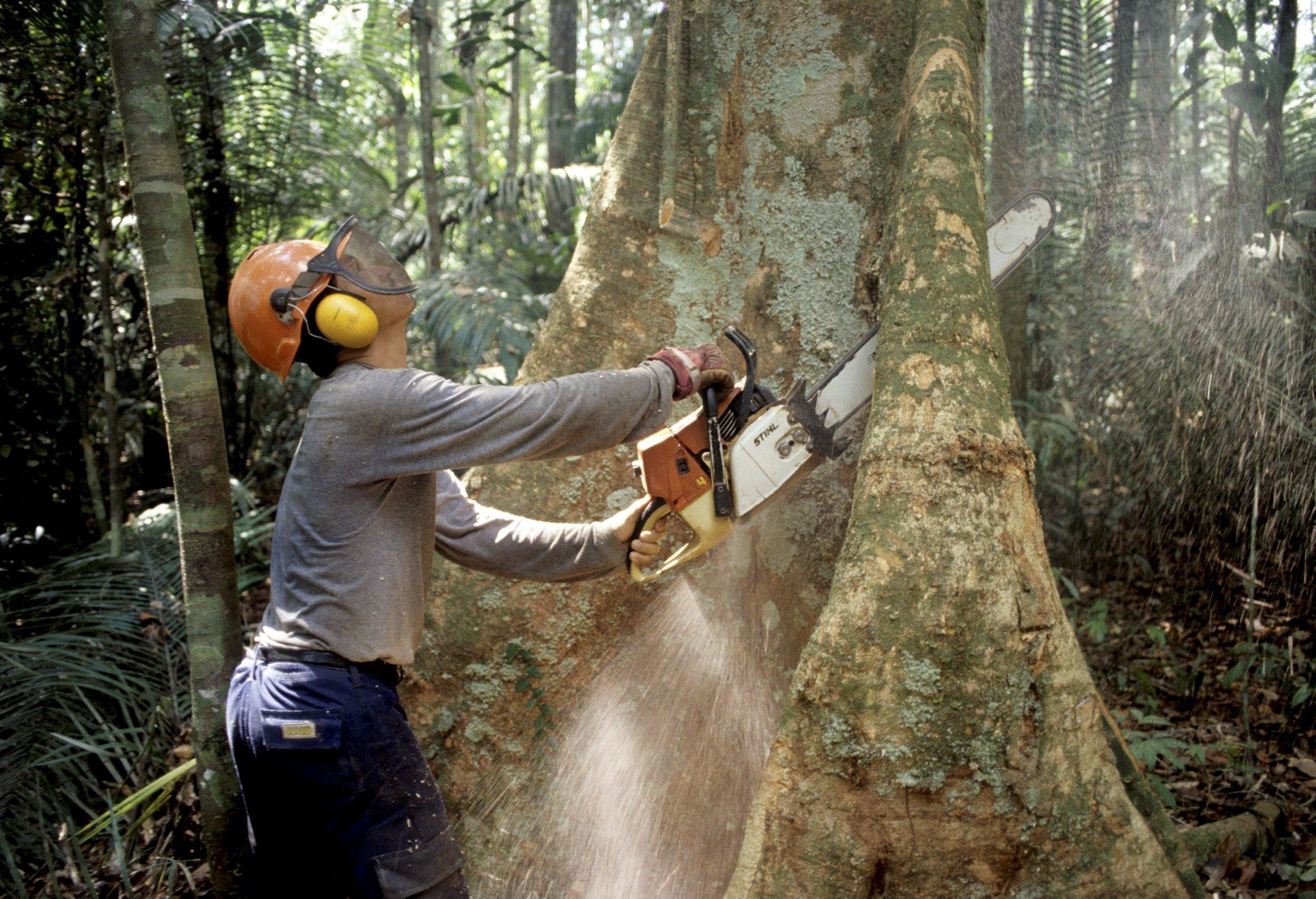 Rodung am Amazonas in Brasilien: Bis 2030 rechnet der WWF mit Waldverlusten von weltweit 170 Millionen Hektar.