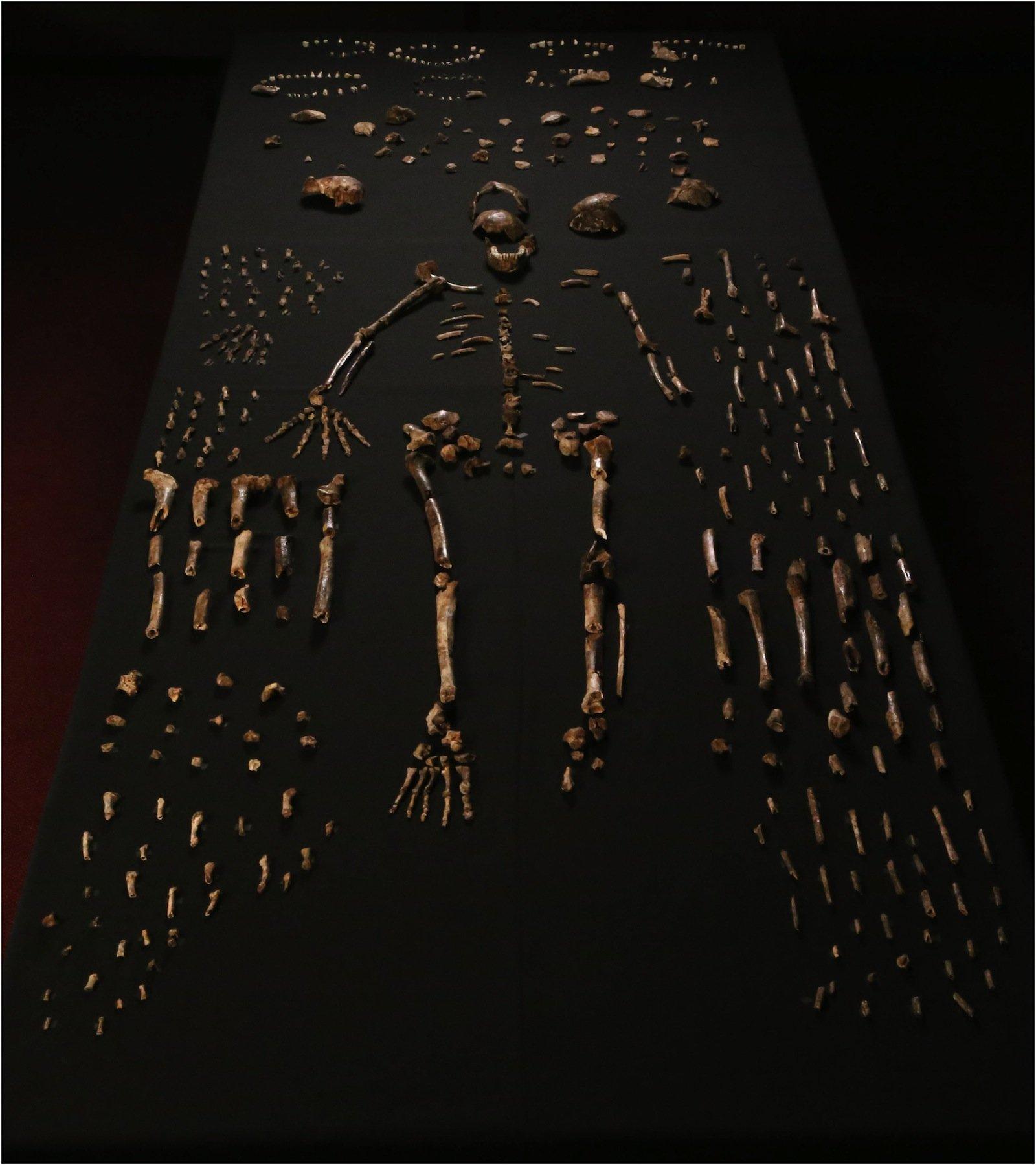 Bereits im September 2013 wurden die Überreste von mindestens 15 Hominiden gefunden. Nach Untersuchungen gehen die Wissenschaftler davon aus, eine neue Menschenart entdeckt zu haben.
