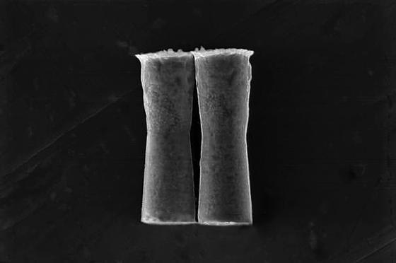 Die Röhrchen, die die Übersäuerung der Weltmeere reduzieren sollen, sind nur sechs Mikrometer lang.