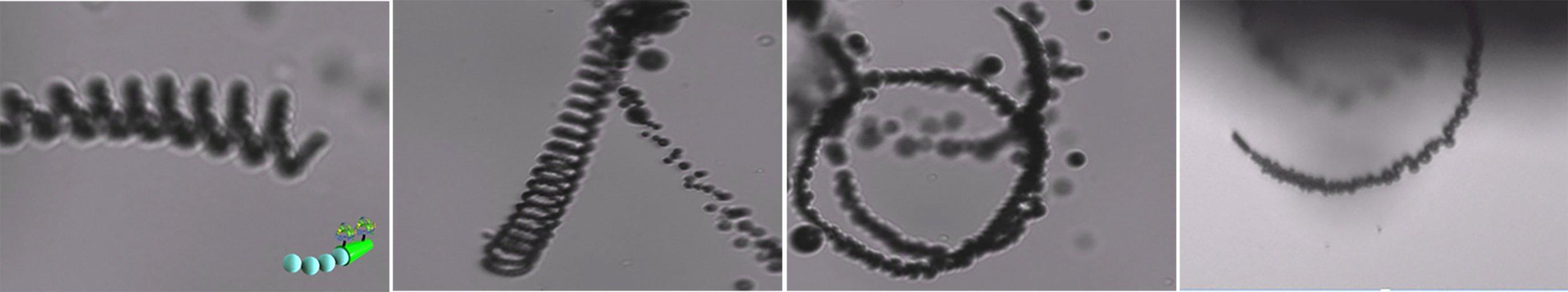 Aufnahmen der Mikroroboter im Wasser: Im Test entfernten die Katalysatoren rund 90 % des gelösten CO2.