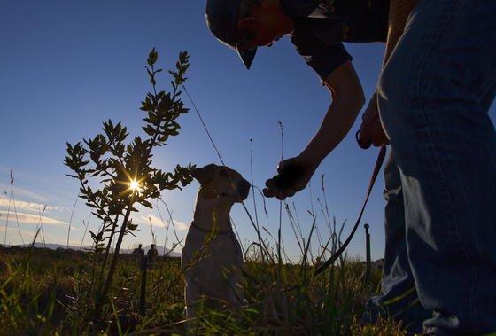 Südafrika: Hier ist auch die PflanzePhyllanthus engleri beheimatet und als Heilmittel gegen Krankheiten wie Husten und Bauchschmerzen bekannt.