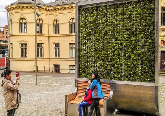 Stehende Grünfläche in Oslo: 1682 Pflänzchen haben auf dem Display Platz und verbessern das Stadtklima so wie 275 Straßenbäume, versprechen die Erfinder aus Dresden.
