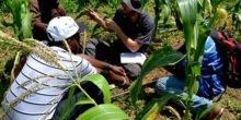 So machen Bochumer Forscher afrikanische Böden 20 % fruchtbarer